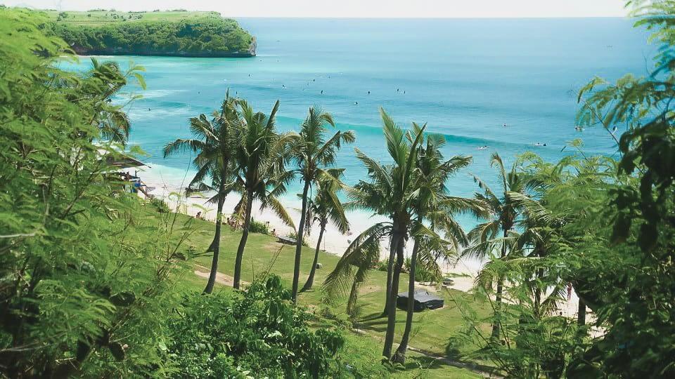 Beach Palms Bali Indonesia Photography